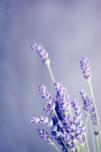 incantesimo lavanta erbe s. giovanni prima parte